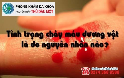 Tình trạng chảy máu dương vật là do nguyên nhân nào?