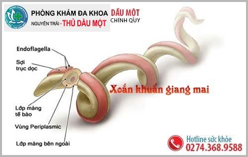 Xoắn khuẩn giang mai ( Treponema pallidum)